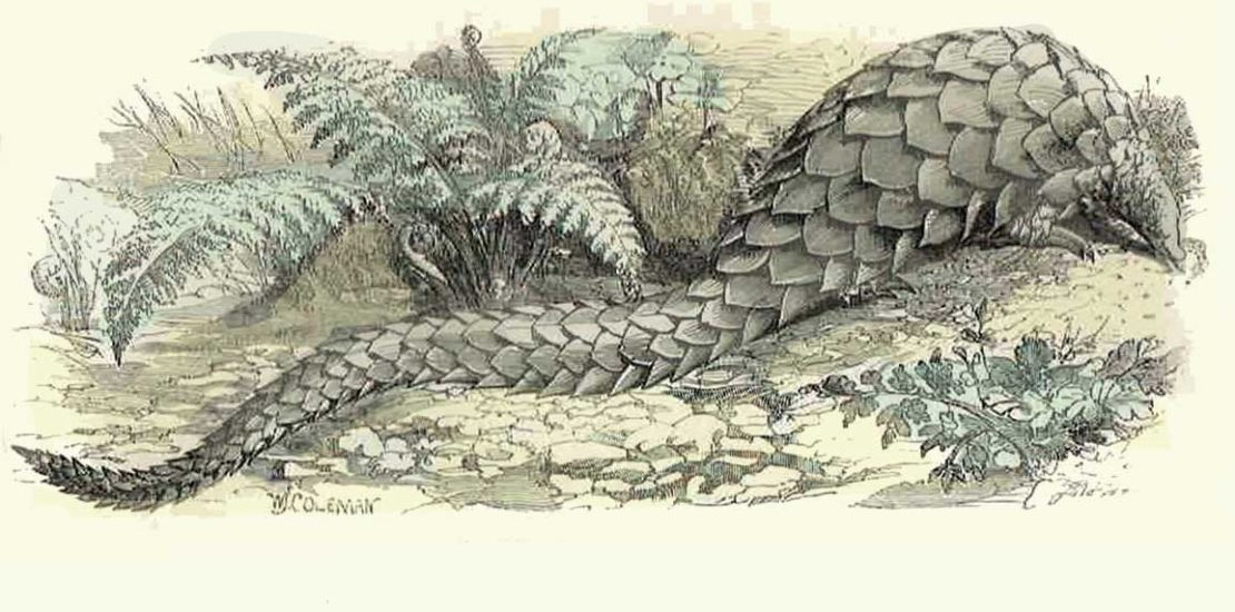 Coloured engraving of a pangolin from J.G.Woods Illustrated Natural History 1869