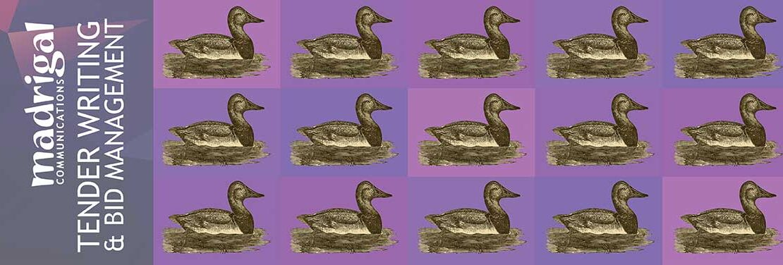 Ducks in a chequerboard pattern