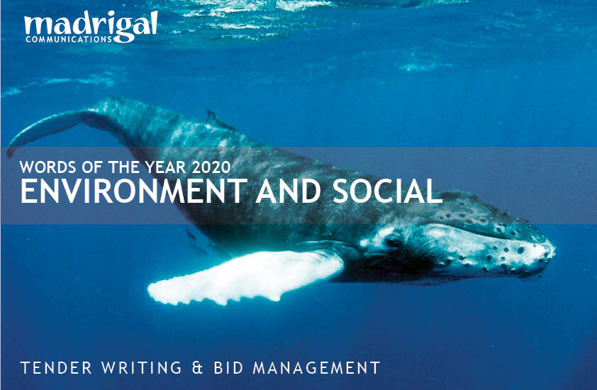 Picture of a humpback whale—headline Words of the Year 2020—Environment and social